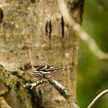 ptaki,ptaki ,przepiekne ptaki... #ptaki #natura #przyroda #ogrody #alicjszrednicka