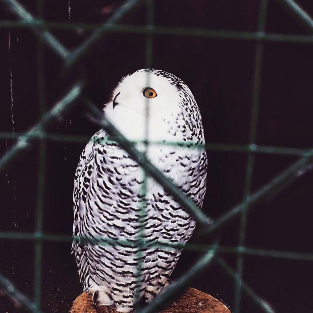 #owl #sowa #zoo #phonephoto
