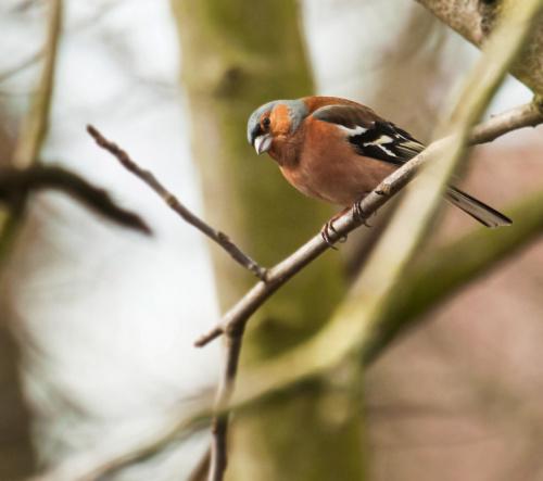 ciagle mnie zaskauja swoimi pozycjami:)) #ptaki #ogrody #alicjaszrednicka
