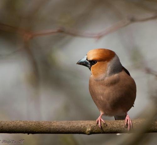 wiosna,ptaki spiewaja,drtzewach drzewa listki wypuszczaja.. #zwierzeta #ptaki #wiewiorki #przyroda #natura