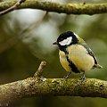 Bogatka.- #ptaki #wiosna #ogrody