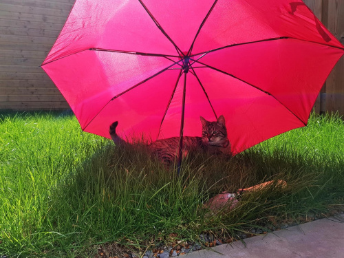 ochrona przed słońcem