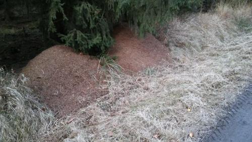 mrówy