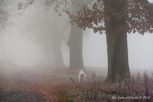 Spacer w mglisty, mroźny poranek.