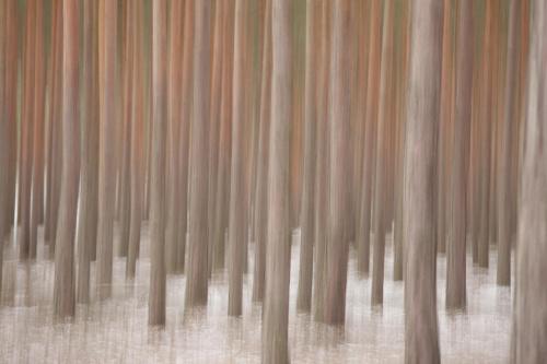 Las inaczej czyli gdy aparat omdlewa :)