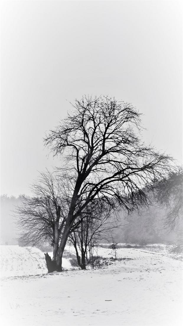 zima w monochromie