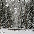 Zimowo, mgliście na pomorzu #las #zima #śnieg #Chojnice
