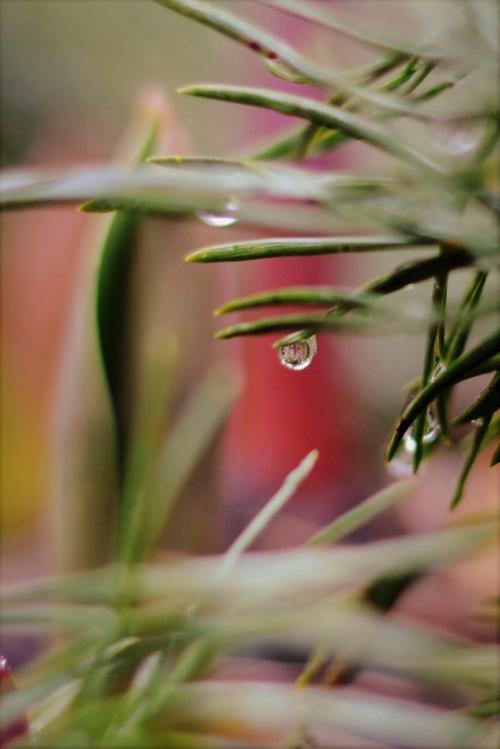 pastelowy deszcz