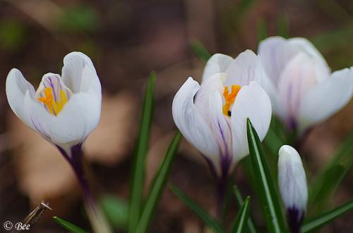 Wiosna :O)