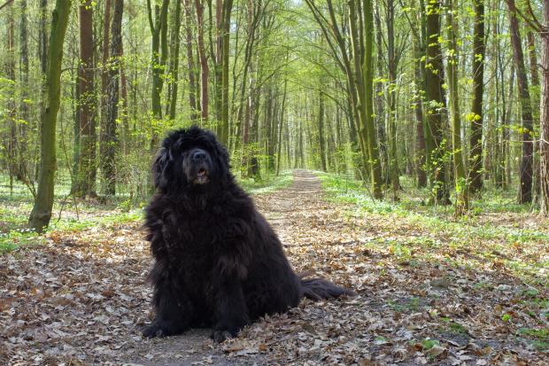 Strażniczka lasu