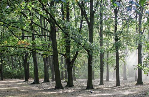 Początek października, a w parkach wciąż zielono :)