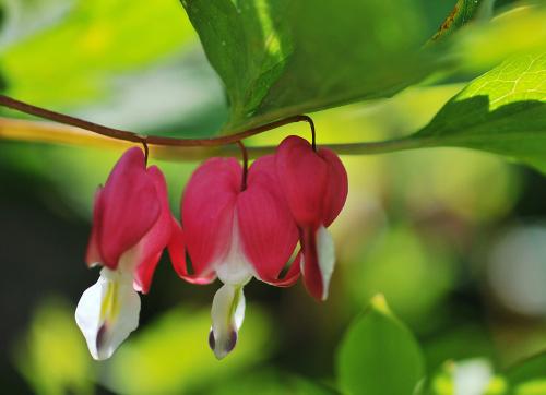 Kwiaty,owady w moim ogrodzie #kwiaty #ogrody #alicjaszrednicka