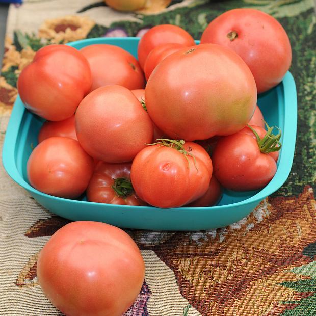 Pomidorki malinowe z mojej malej szklarni a nasiona z Polski:) pierwszy raz w zyciu wyhodowalam pomidorki z nasion, Musza mi sasiedzi pomagac w zjedzeniu,tak obrodzily:) #pomidory #ogrody #alicjaszrednicka