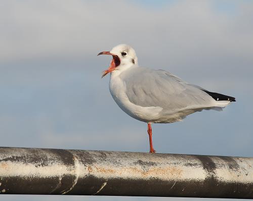 Bremerhaven-przy Placu Willy-Brandt #Bremerhaven #ptaki #mewy