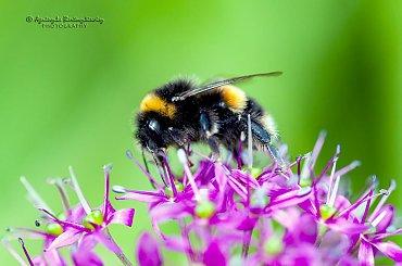 Fauna - zwierzeta, owady i insze gady