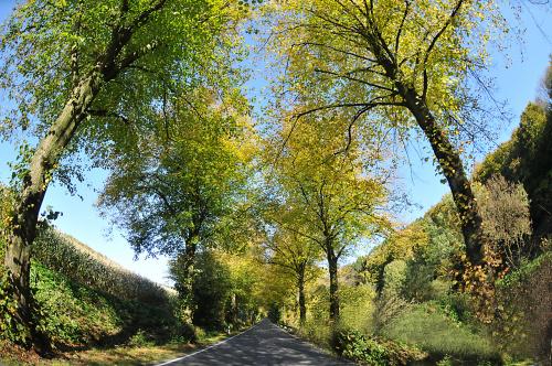 jesien #lasy #jesienne #drogi alicjaszrednicka-mondritzki