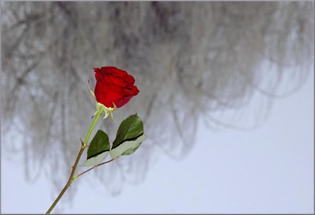 dla WIESI ( vika38 ) z najlepszymi życzeniami w dniu imienin :)