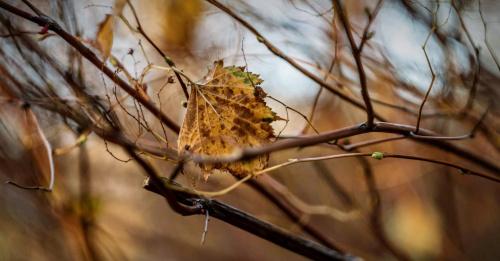 Ostatnie znaki Jesieni