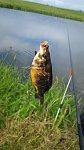 images84.fotosik.pl/977/dc178b0c78206d3dm.jpg