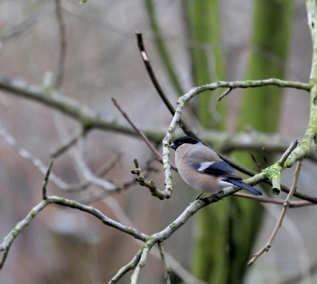 szkoda,ze juz wkrotce bedzie ich coraz mniej przed oknami tych przepieknych istot bo coraz cieplej,,lecz zbliza sie przesliczna wiosna- dla nich raj...j beda spiewac wsrod lisci drzew, i tez bedzie pieknie..:)) #ptaki #przyroda
