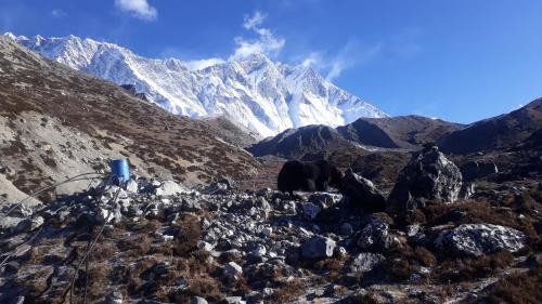 """Lhotse, a na pierwszym planie pasący się jak i ujęcie wody dla Chukhung, z widoczną """"instalacją wodociągową"""" napędzaną przez grawitację."""