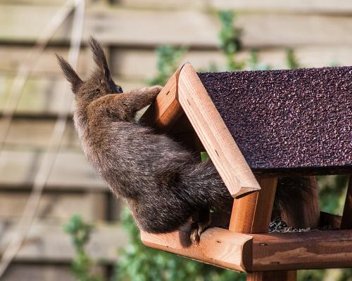 wiewiórkowa sesja fotograficzna w plenerze :))) #wiewiórki #natura alicjaszrednicka-mondritzki